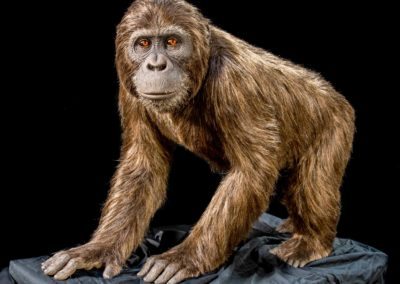 ark-encounter_phase-1_hebron_animal-kinds_ape-kind_low-res_06282016_0001